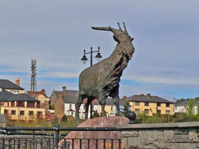 King Puck at Killorglin
