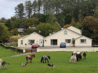 Horse Riding Killarney - Muckross Riding Stables