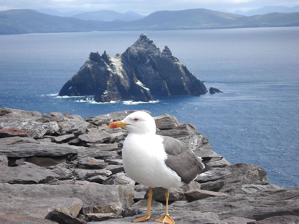skellig michael birds
