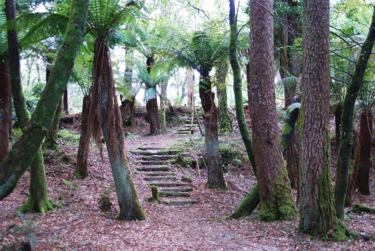 steps at Kells Bay House and Gardens