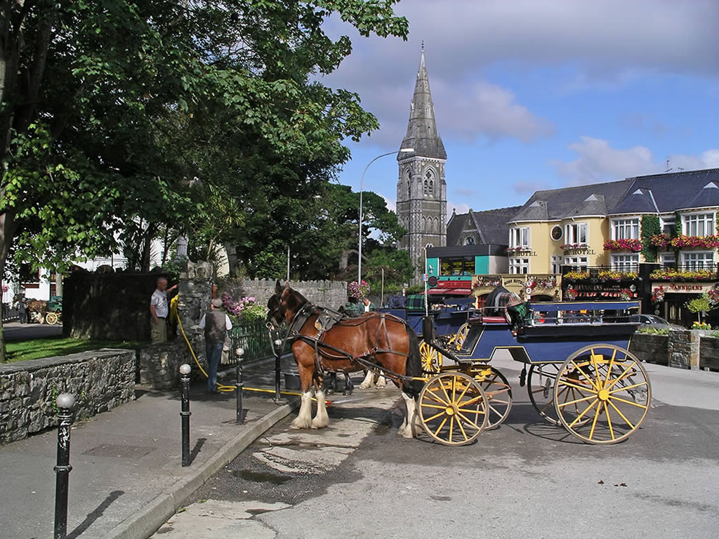killarney jarvey
