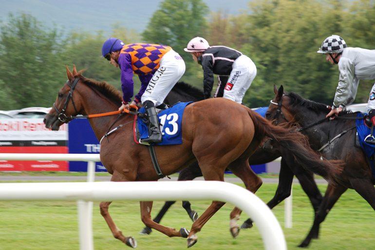 Horses going to post Killarney